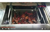 Shrimp Ultrasonic Cleaning